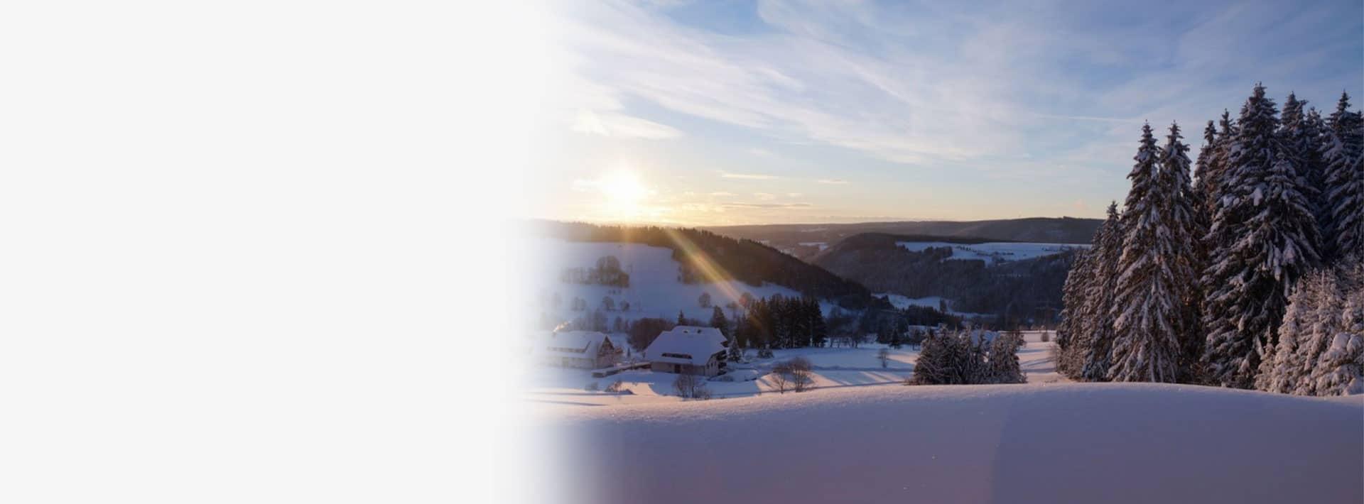 Teamworkshop im Schwarzwald für Teambuilding Blogbeitrag